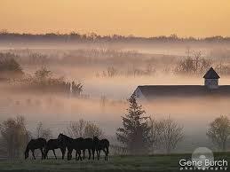 foggy morning1