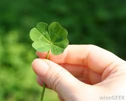 four leaf wish
