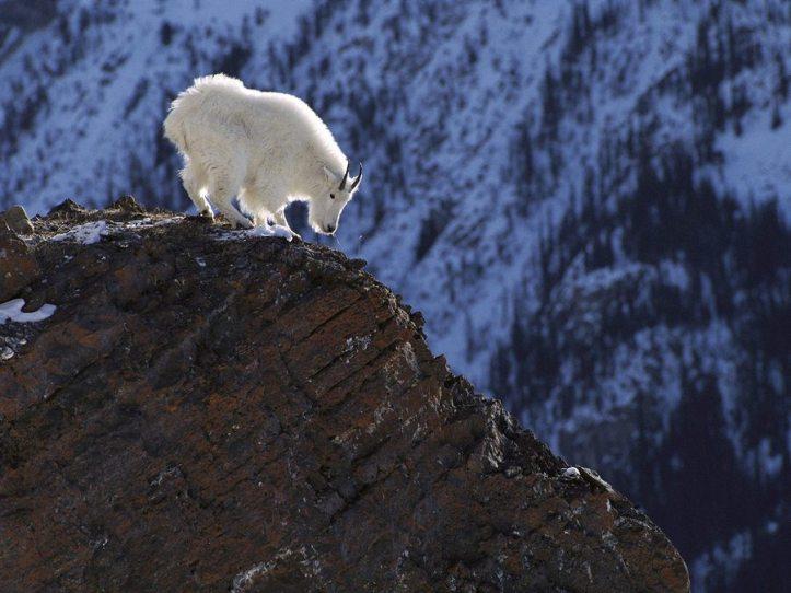 Snowy-Colorado-Mountains