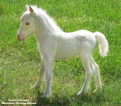 white colt