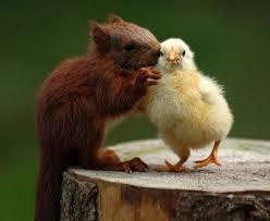 animal love5