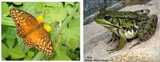frogs and butterflies