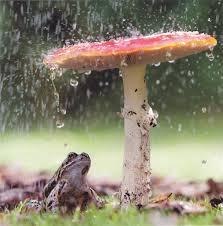 toadstool rain