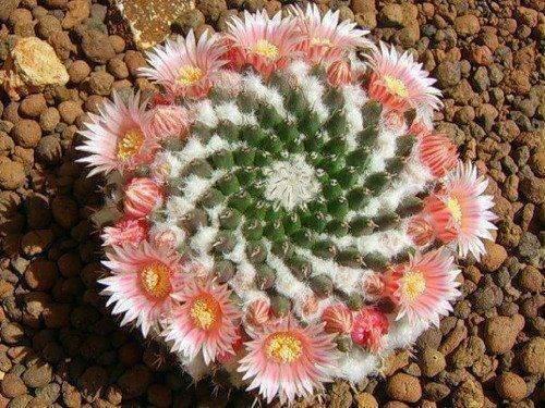 spiraling cactus