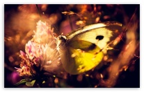 yellow_butterfly_2-t2