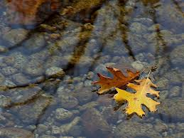 leaf on water