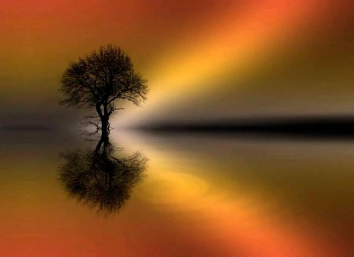 tree-in-reflection