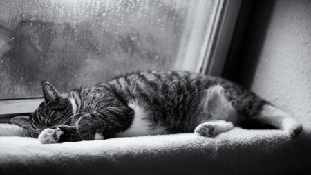 sleeping-in-rain