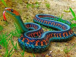 snake-colored