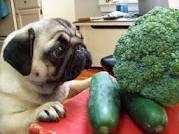 dog-brocolli