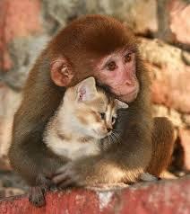 animal-love3
