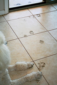 muddy_paw_tracks_300
